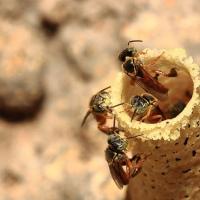 Doctor Who e o desaparecimento das abelhas