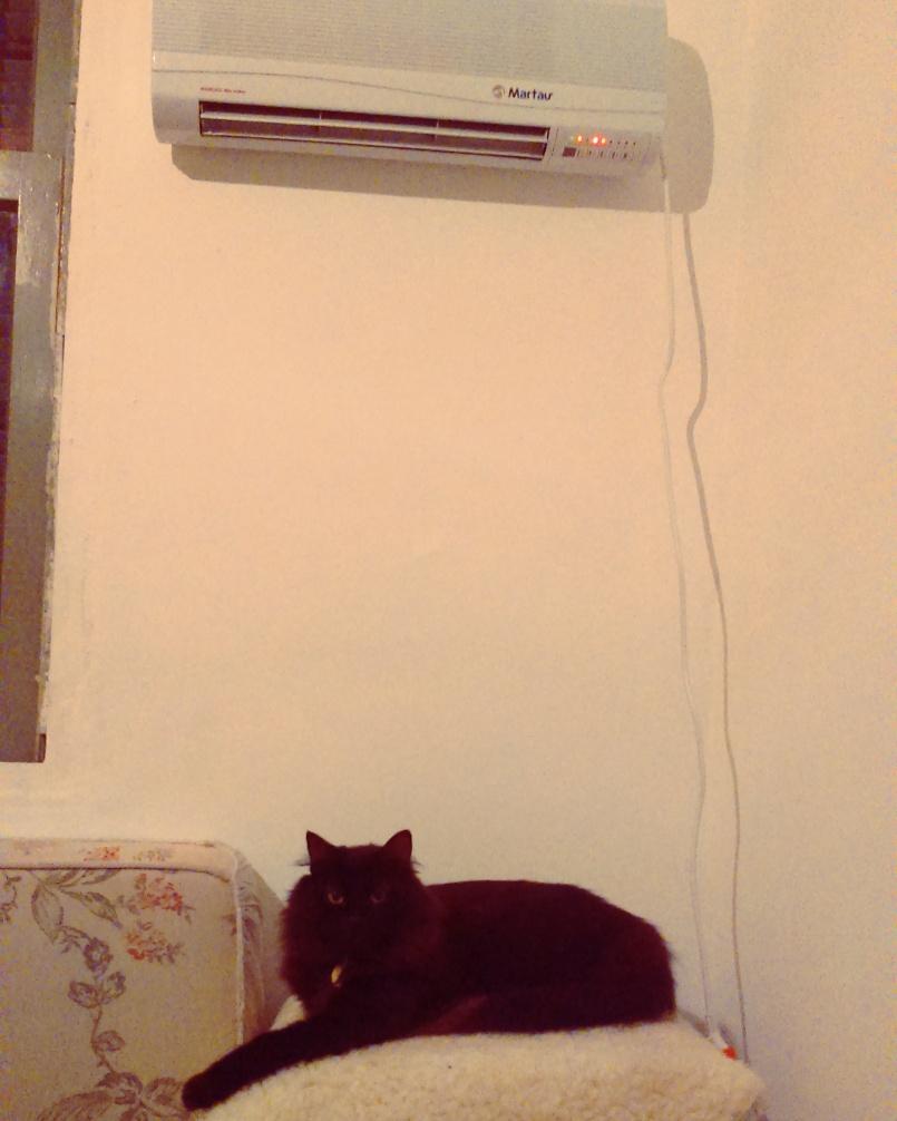 Espeto aprendeu que manter-se aquecido é fundamental.